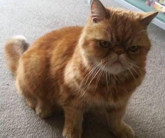 Joyriders kill cat in sick game in North Edinburgh