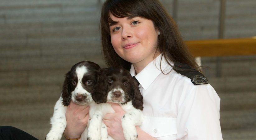Scottish SPCA welcomes MSP Emma Harper's debate on illegal puppy trafficking
