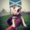 Charity Bull Terrier event to be held in Edinburgh