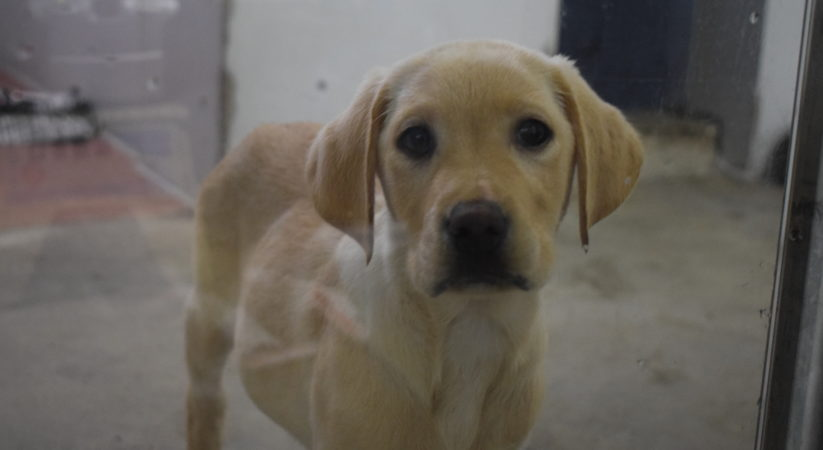 Scottish SPCA warns of the reality of buying a puppy for Christmas