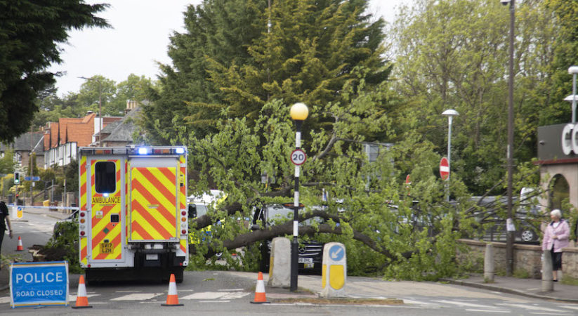 Tree falls on top of taxi in Davidson's Mains