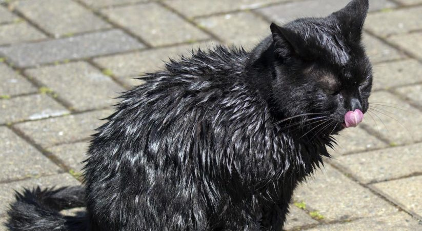 Firefighters rescue cat from Water of Leith