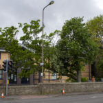 VIDEO: Watch as tree specialist brings down unsafe tree at city police station